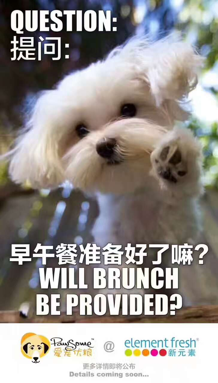 Brunch with your pooch!
