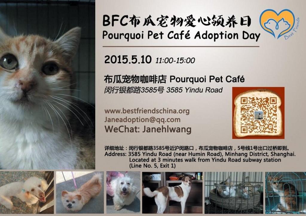Adopción-de-mascotas-1024x724